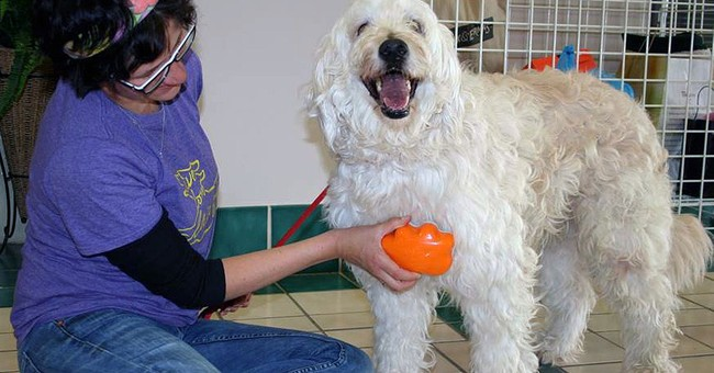 Soggy Doggy, Pup Pot among inventions by, for pet owners