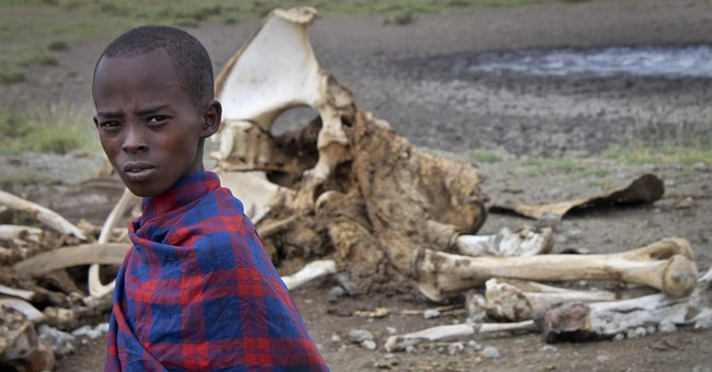 New study identifies elephant poaching hotspots in Africa