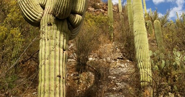 Bleisure Bits: Check out Tucson's scenic Sabino Canyon
