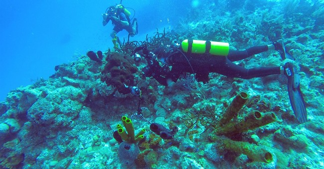 Diver's dream: Cuba's pristine and protected coral reefs