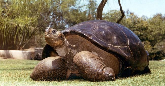Speed the 150-year-old tortoise dies at San Diego Zoo