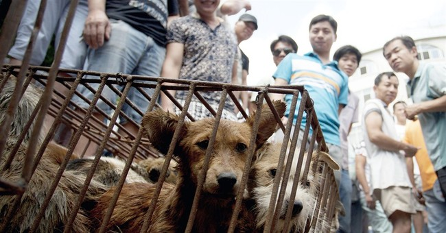 Eateries in Chinese town hold dog meat festival amid outcry