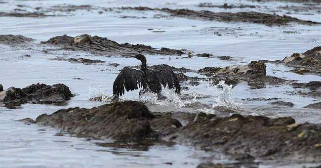 Congress probing California oil spill that blackened beaches