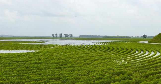 USDA: Record soybean crop planted, progress slowed by rain