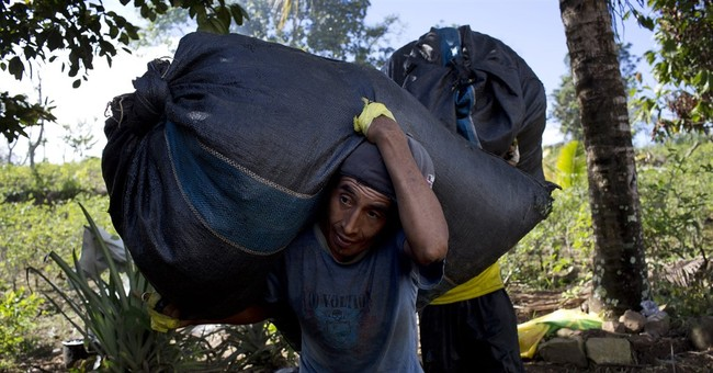 AP PHOTOS: In Peruvian valley, coca harvest means survival