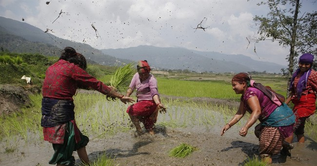 Image of Asia: Celebrating while planting paddy in Nepal