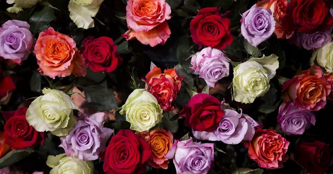 Heaven scent: Finding may help restore fragrance to roses