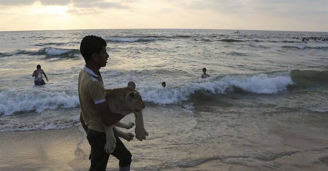 Lion cubs stuck at Gaza border en route to Jordan shelter