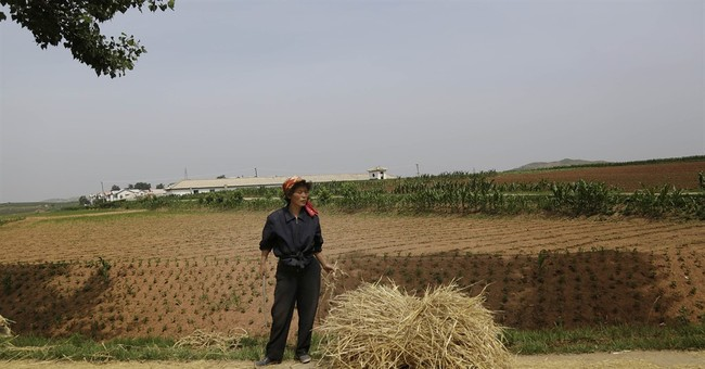 AP Exclusive: North Korean farmers face dry fields, drought