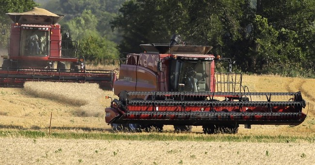 Concerns over US winter wheat may boost low crop prices