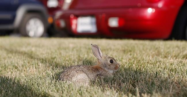 Lush conditions fuel Colorado increase in rabbit fever