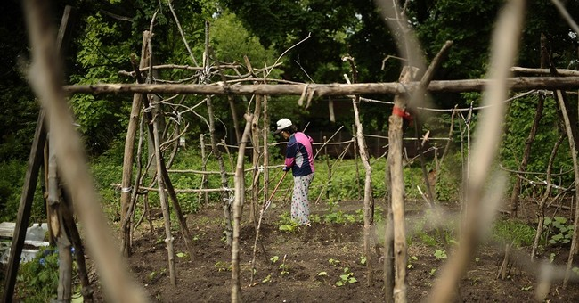 Chinese families of Yale students grow a garden, tradition