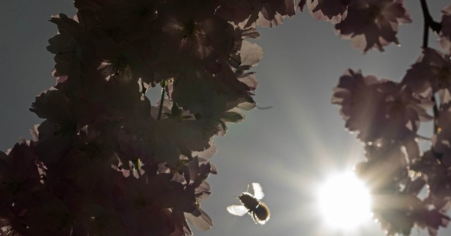 Study: American, European bumblebees feeling climate sting