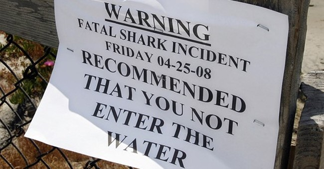California shark attack rates plunge 90 percent since 1950s