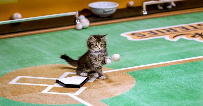 Purr now, play later: Cats take it easy for 'Paw Star Game'