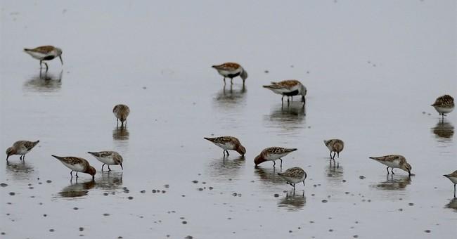 As habitats vanish, migratory birds flock to N. Korea shores