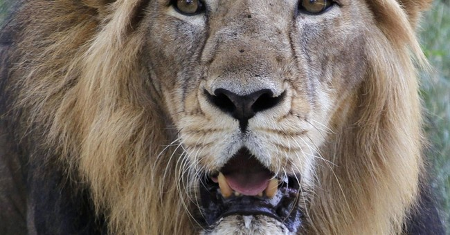 India floods kill 10 endangered lions near Gujarat sanctuary