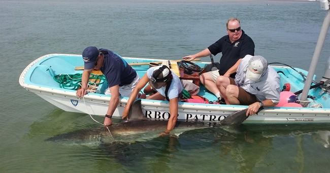 Man behind shark rescue credits quick-thinking beachgoers