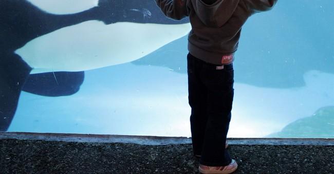 SeaWorld suspends worker accused of posing as PETA activist