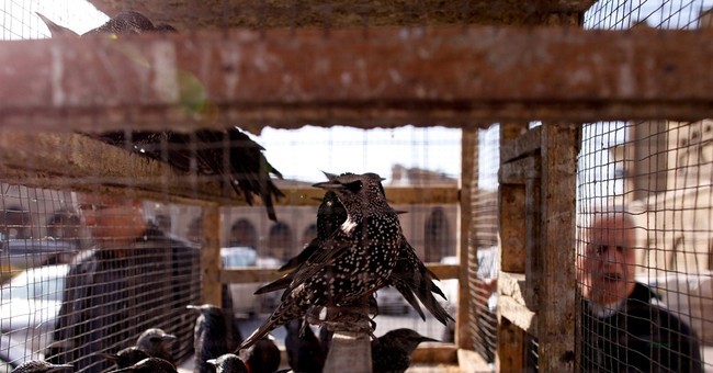 Iraq's birds of mercy take flight from din of war