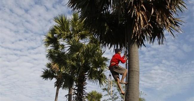 Image of Asia: Harvesting palm juice in Cambodia