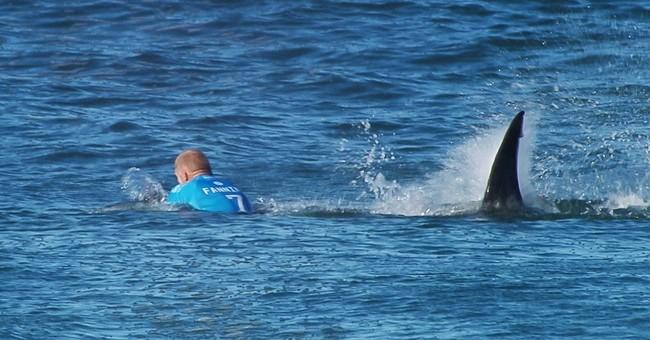 Bare-handed shark wrestler: 'I haven't got a scratch on me'