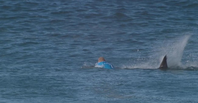 Surfer fighting off shark not so unusual in South Africa