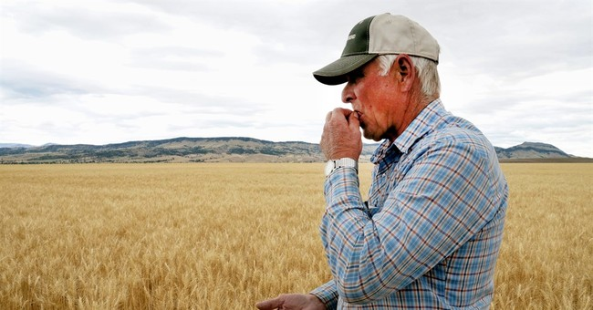 Drought dings quality of winter wheat in Northwest