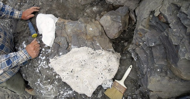 Collector finds marine reptile fossil in mountains of Alaska