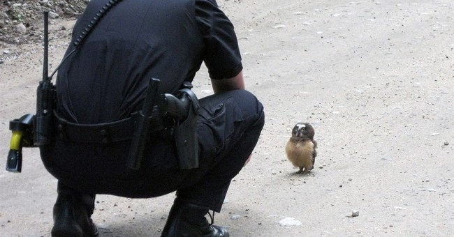 Owl with an attitude wins face-off with deputy