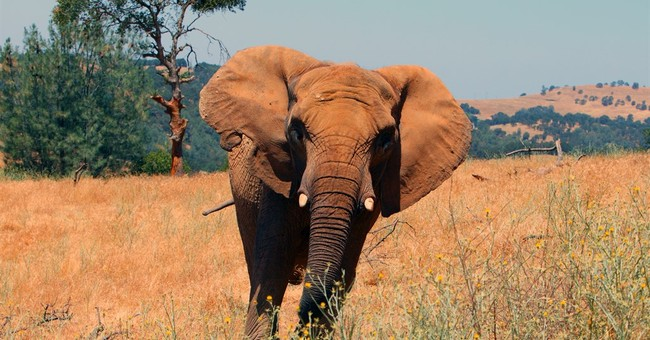 1 of oldest African elephants in North America euthanized