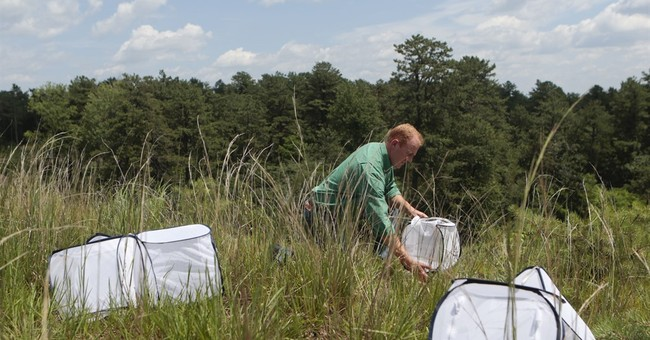 Endangered butterfly recovering in some, not all, of range