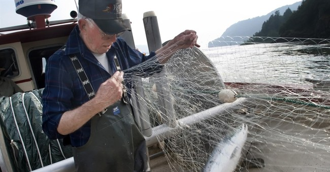Half of Columbia River sockeye salmon dying due to hot water