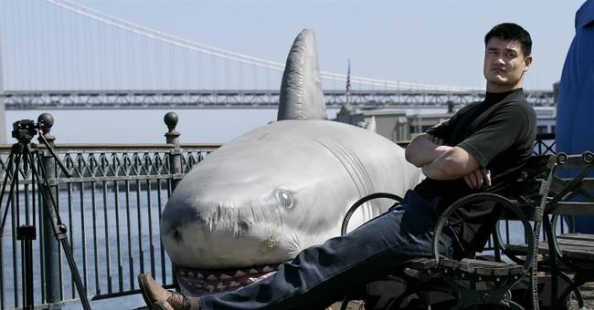 Appeals court upholds California's shark fin ban
