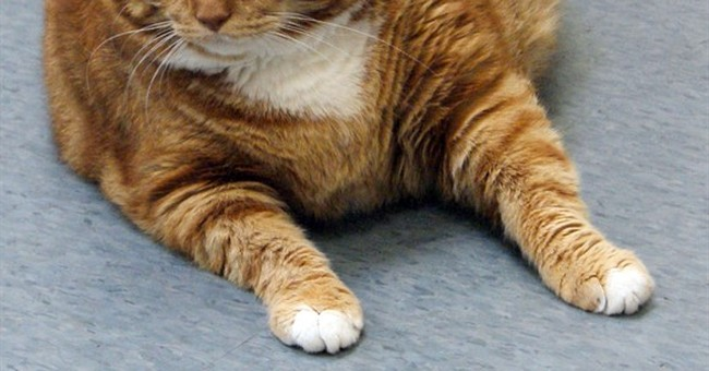 Former 41-pound fat cat in Texas slims down to 19 pounds
