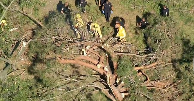 8 children hurt, 2 critical, by falling tree in California