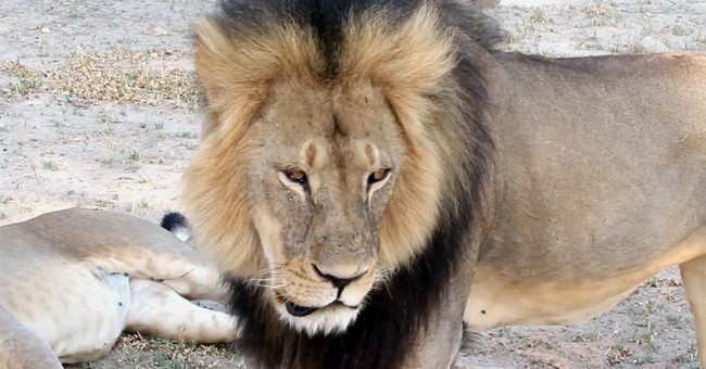 The Latest: Hundreds protest lion killing at dentist office