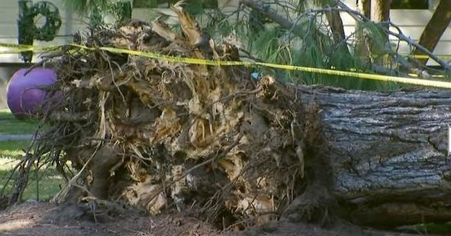 8 children hurt, 2 critical, by falling tree in California