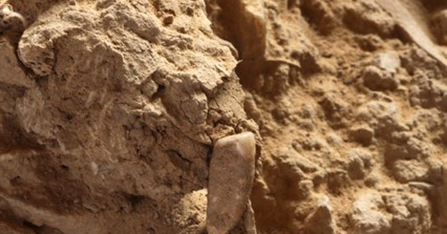 French archaeology students find 560,000-year-old tooth