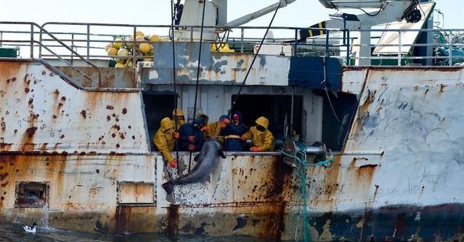 Brazen ships hauling fish near Antarctica ignore navy patrol