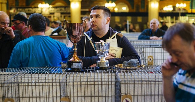 At the British Homing World Show: Not your average pigeon