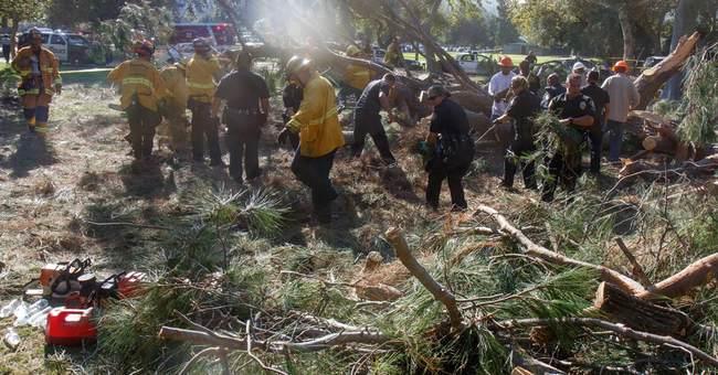 Probe into California tree fall begins; kids seriously hurt