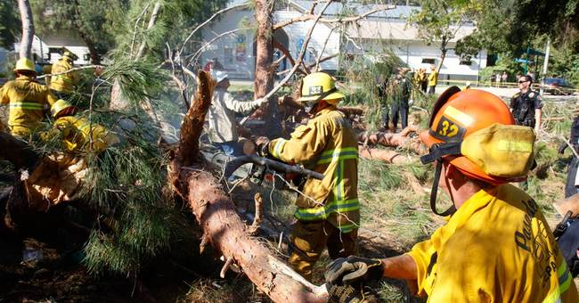 Probe into California tree fall begins; kids seriously hurt