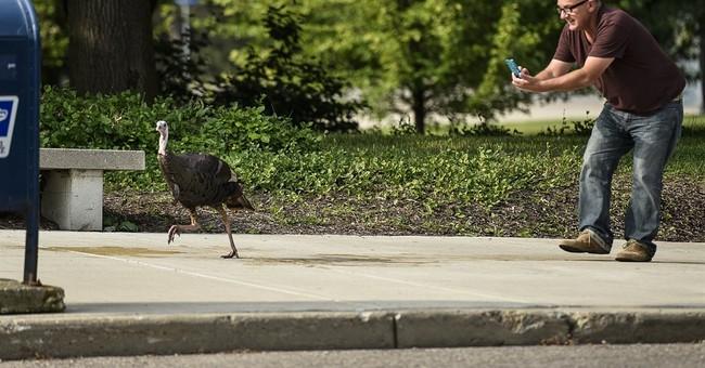 Wandering turkey causes stir at University of Michigan