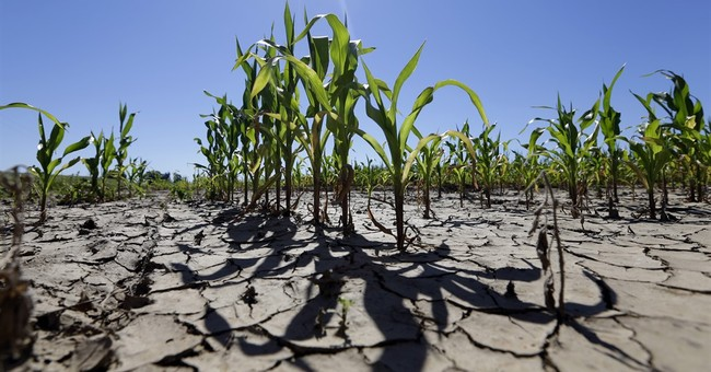 Some Midwest farmers' crops falter in record rains