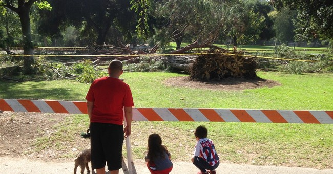 2 kids injured by falling California tree leave hospital