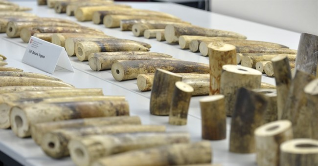 Swiss customs seize 578 pounds of ivory en route to China