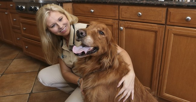 Pets pick up on cues to comfort the dying, the grieving