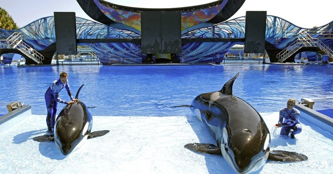 SeaWorld attendance keeps falling, but shares inch higher