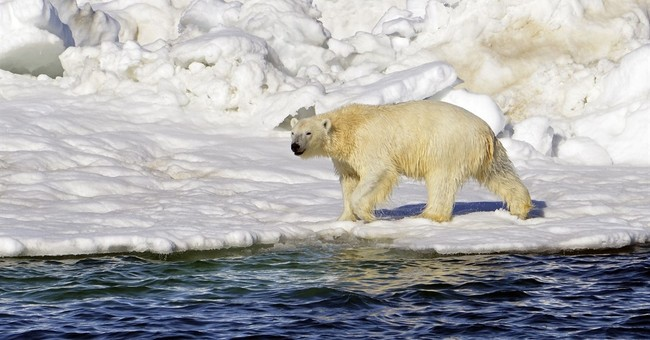 Federal appeals court hears arguments on polar bear habitat
